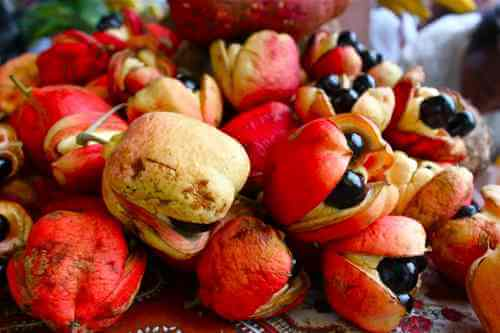 Ackee_Fruit