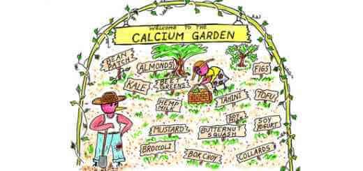 20 VeganPlant Sources for Calcium
