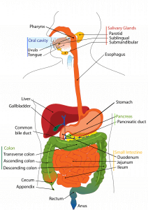 - 6 Ways to Optmise Digestion