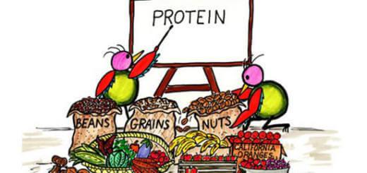 20 VeganPlant Sources for Protein