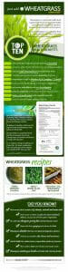 - Amazing Health Benefits of Wheatgrass